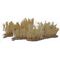 Elephant Grass (Pack of 10)